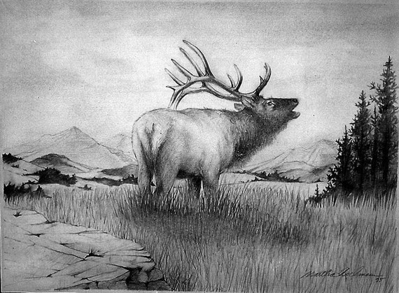 Colorado Elk, 5 x 7 print on acid free 8.5 x 11, 65 lb., off-white matte, signed by me, carefully shipped flat.