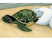 """Print - Charapa Turtle Hatchling - Baby Turtle 8"""" x 10"""" (3"""" x 6.5"""" actual image)"""