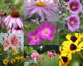 Flower Collage Photos 4x6 Prints Set of 7 Spring Prints for Home Decorating