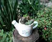 Succulent and Cactus in Decorative Watering Pot