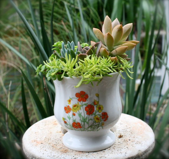 5 Species of Succulents Planted in a Rustic Vintage Style Pot
