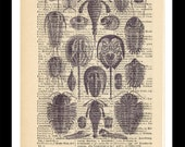 art print of marine life on a page from a vintage dictionary