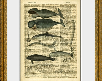 WHALE COLLAGE - dictionary art print - an upcycled antique dictionary page with an antique ocean illustration - lovely sea life wall art