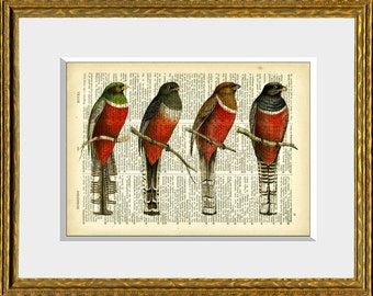 Fun Dictionary Page Print - BIRD WATCHERS - an upcycled antique dictionary page with antique bird illustrations -natural history wall art