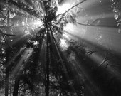 Birth of Day - Black & White Photography / Imaging - forest / morning / sun / rays / trees / light