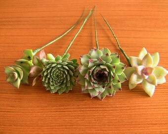 16 Wired Succulents for DIY bouquet