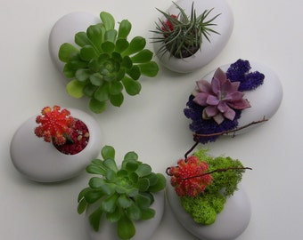 Succulent thank you gift (each)