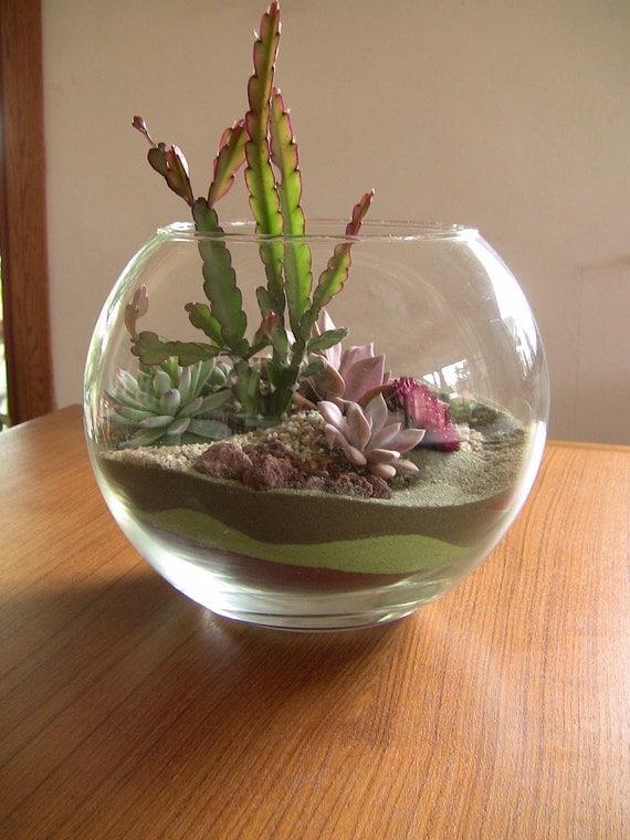 Items Similar To Succulent Terrarium On Etsy
