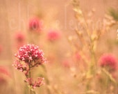 Pretty Hazy Dreamy Summertime Photography - High Quality Fine Art Photography Print - Summertime Flower Photography