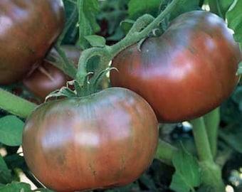 Cherokee Purple Heirloom Tomato Seeds Non GMO