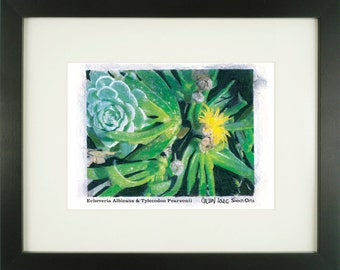 """Echeveria Albicans & Tylecodon Pearsonii, """"Hen and Chicks"""", With Frame of Choice, Matted, and Signed Art Print"""