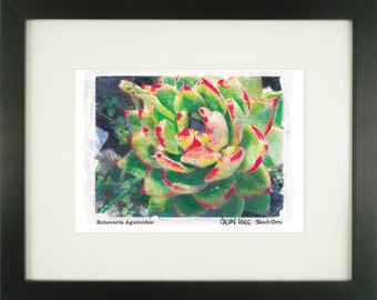 """Echeveria Agavoides, """"Red Edge Echeveria"""", With Frame of Choice, Matted, and Signed Art Print"""