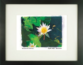 "Nymphaea Odorata, ""Fragrant Water Lily"", With Frame of Choice, Matted, and Signed Art Print"