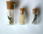 Insect wing and tooth specimens