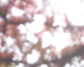 blossoming tree sunlight pinhole photo postcard 4x6, 20x24. Edition of 100.