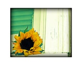 Sunflower Fine Art Photograph - 8 x 10 Photo -Flower Windowsill Yellow Green Mint Sun