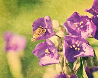 Busy in Purple