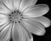 Photo Card - Thirteen Petals, Flowers, Black & White, Fine Art Photography 5x7 Folding Blank Card