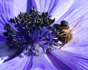 Honey Bee Art, purple flower photography, nursery wall art, nature photography, 5x5 8x8 12x12 fine art print