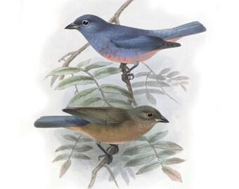 BIRDS Instant Download for Wall Decor, Digital Image Transfer, pastel blue birds illustration image 026