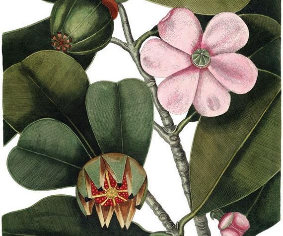 Vintage Flowers Instant Download Tree pink flowers botanical illustrations 099