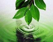 Spirulina Powder Organic Natures Super Food Nutrient Rich Blue Green Algae Supplement