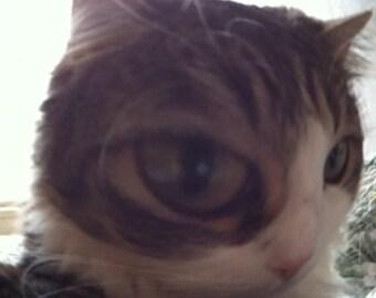 Stinkeye Cat Print  Fine Art Print Giclee