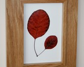 Pressed leaf art - 'Smoke Bush' Red Autumn Leaves