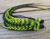 Bright NEON Fluorescent Yellow Chartreuse & Black Lace Eurohackle Zebra Long Feather Earrings Native Jewelry Grizzly Rooster Saddle