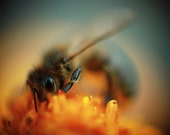 Macro Soft Turquoise and Orange Wall Art of Bee photograph Unframed room decoration A4
