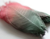 5 inches red to green dried rubber leaves - pressed skeletal mulberry leaves - natural crafting supply FREE SHIPPING
