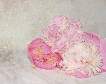 Pink Peonies Fine Art Photography , Flowers with a light texture , Floral Wall Art , Shabby chic home decor , Spring , 8 x 10