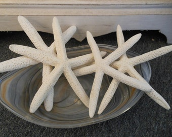 Beach Decor 4 White Starfish - Seashells - Seashell Supply - Starfish - Coastal Home Decor