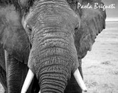 Africa Art, Wildlife Photography Africa Photography Travel Art  Elephant's Face, Black and White, 8x10, Macro, Wall Art