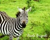 Africa Photography Travel Art Zebra Tanzania Ngorogoro Park, Green, Geometric, 8x10, Nursery Art