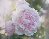 Eternal Spring : Fine Art Photography, Pink Peony, 8x10