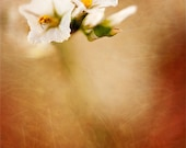 White Flowers, yellow, green, rustic, earth tones