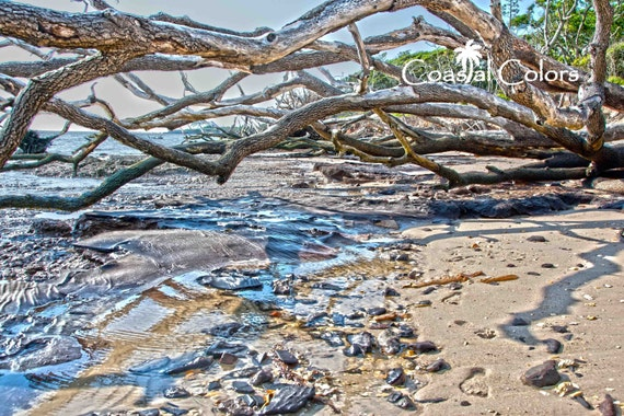 Talbot Island Driftwood Beach