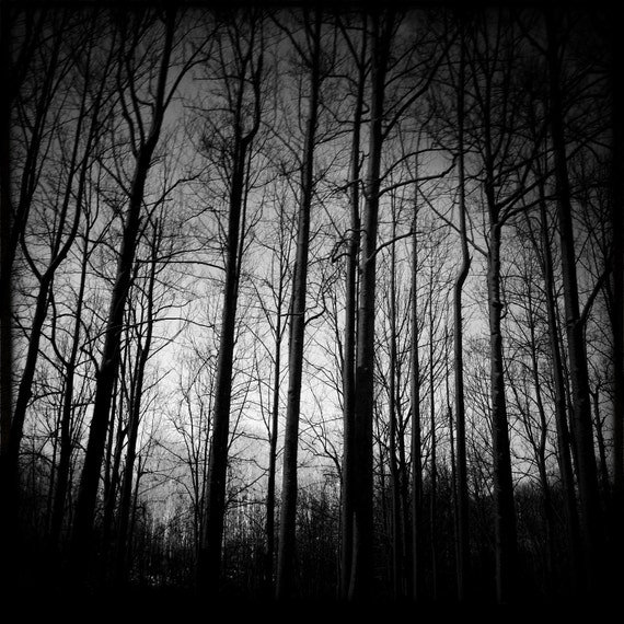 """8"""" x 8"""" Silhouetted Trees photo by Andy Deane"""
