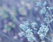 6x8 Magic  meadow - home decor blue pastel  summer photography