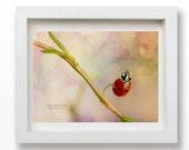 6x8 Jumping ladybird   -home decor photography