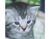 Kitten Photo Note Cards, Set of 4, Fine Art Photography,Tabby,Cute,Close-up