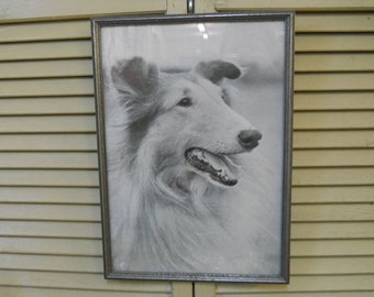 """Black and White Framed Photograph of a Rough Coated Collie - 10"""" x 15"""""""