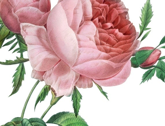 Roses Bouquet Victorian Antique Digital Image Download Transfer Pillows Tote Bags Towels Burlap Iron T-Shirt No. 0067