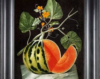 FRUIT PRINT Watermelon 8X10 Botanical Art Print 14 Antique Brookshaw Beautiful Red Spotted Watermelon Seedless Plant Yellow Flowers Vine