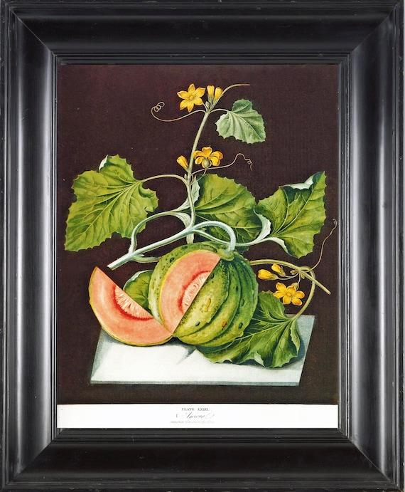 FRUIT PRINT Melon 8X10 Botanical Art Print 7 Antique Brookshaw Beautiful Orange Green Melon with Yellow Flowers French Garden Room Decor