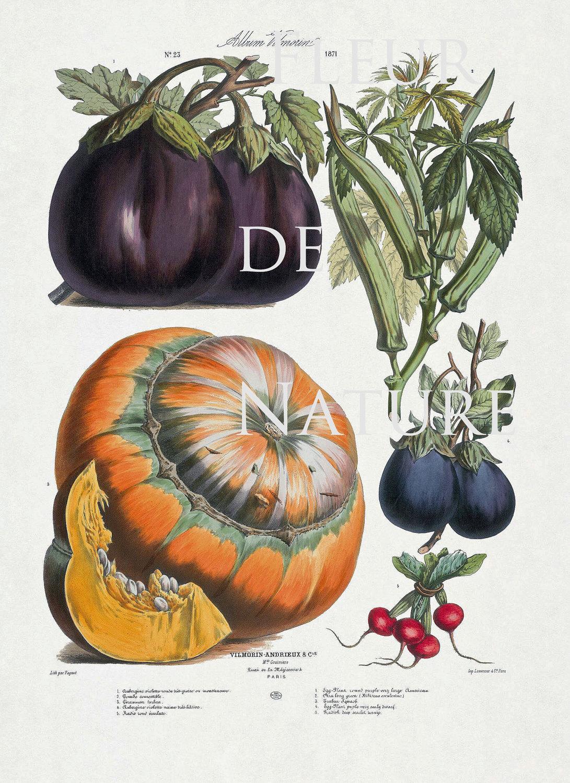French Vegetable Garden 8x10 Botanical Art Print 23 Antique