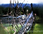 Winter Sprigs - Vineyard, Grape, Rustic, Rural, Nature - 5 x 7 Fine Art Photography Print