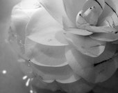 Portrait of a Flower - Black and White, BW, Minimalism, Abstract, Nature, Petals, Flower - 5x5 Fine Art Photography Print