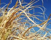 Windblown - Rural, Leaves, Dry Grass, Nature, Blue Sky, Landscape - 5x7 Fine Art Photography Print